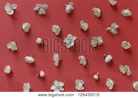white cherry blossoms on red paper background