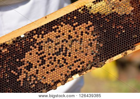 group of working bees on honeycomb