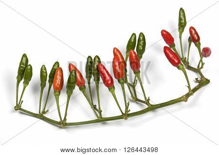 Studio Shot  Red And Green Devil Chillies 4