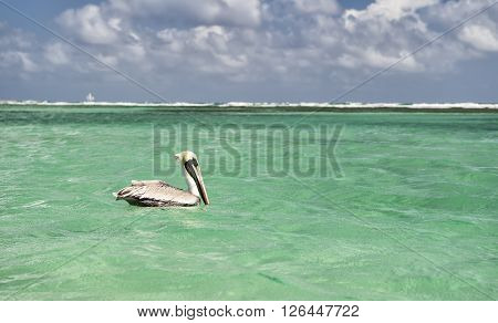 Pelican swimming on clear sea water with cloudy blue sky