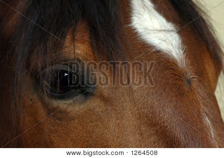 Brown Horse Eye Close-Up