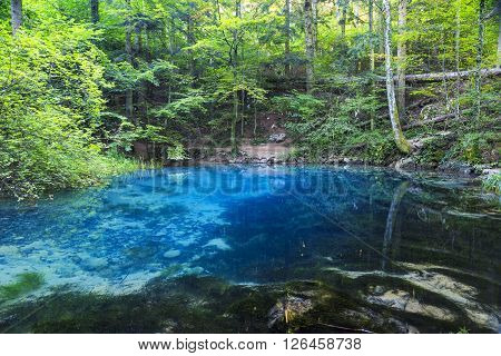 Clear and beautiful water source in forest