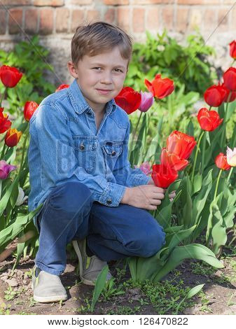 Boy sitting near red tulips in the spring garden