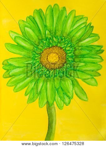 Green gerbera on yellow background, watercolor painting.