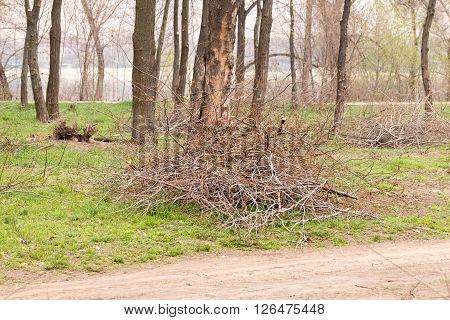 Heap Of Cut Tree Branches