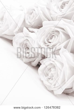 Beautiful white roses toned in sepia can use as wedding background. Soft focus. Retro style