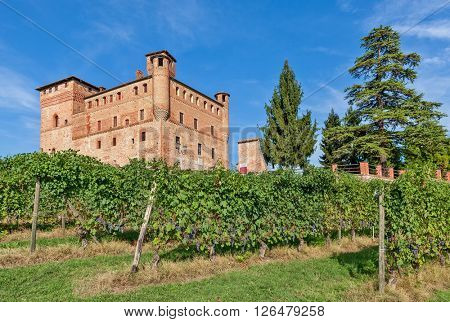 Old medieval castle and green vineyards in Piedmont, Northern Italy.