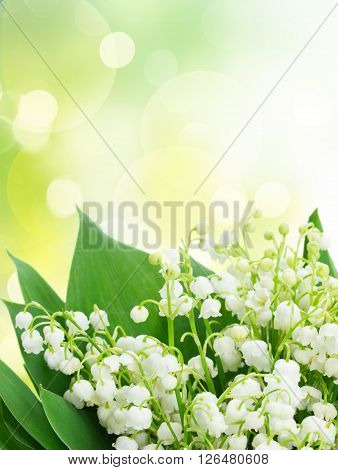 Bunch of Lilly of valley close up in green garden