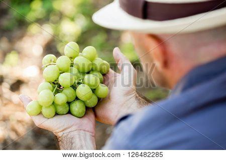 Man standing in vineyard