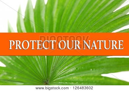 Protect our nature text on palm leaf background