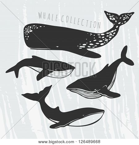 illustration of different whales: cachalot, orca, big blue whale