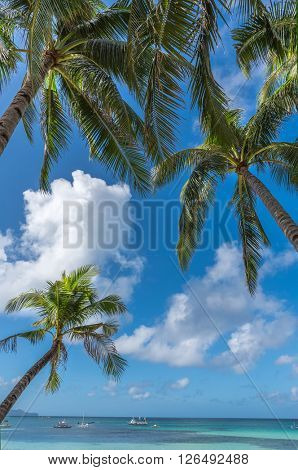 Tropical beach background from Boracay island with coconut palms tree leafs, blue sky and turquoise sea water, Travel Vacation