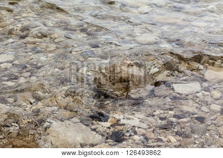 Brown boulder surrounded by waves and ripples various rocks under water background