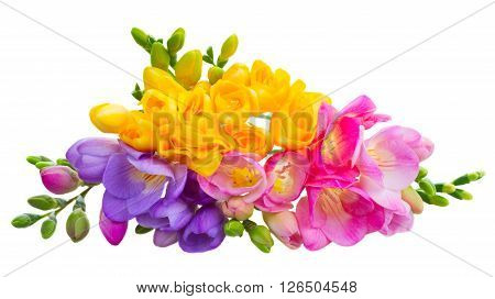 Pile of fresh yellow, red, pink and blue freesia flowers isolated on white background