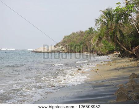 Palms in a caribbean beach in the Tayrona Park