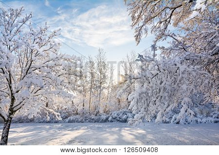 A snowy winter sunrise scene in Toledo Ohio with the snow clinging to the trees.