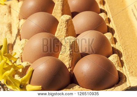 Cardboard egg box with  brown eggs closeup
