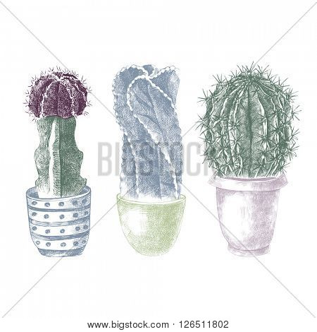 Hand drawn  colorful cactuses in pots