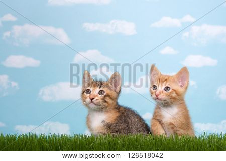 Two kittens in tall grass with blue sky background white fluffy clouds. Looking up to side. Horizontal presentation with copy space above and to side