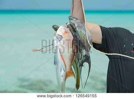 Human hand holding bunch of fresh caught various fish against tranquil beautiful ocean at Cuban Varadero island