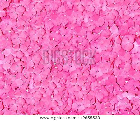 pink rose petals everywhere