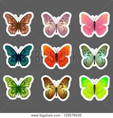 Set of vector butterflies stickers. Colorful butterfly stickers. Vector stickers.
