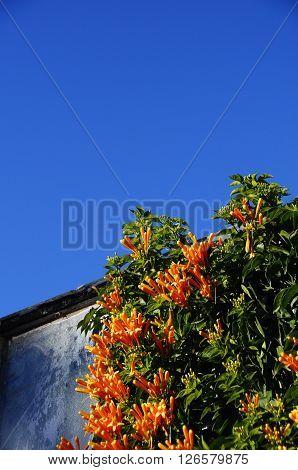 Orange Flowers And Blue Sky