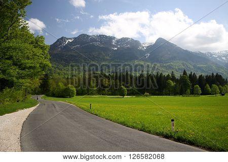 Asphalt alpine road by the grassy meadow