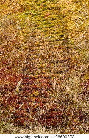 Trail plastic caterpillars modern cross-country vehicle on moss - save tundra