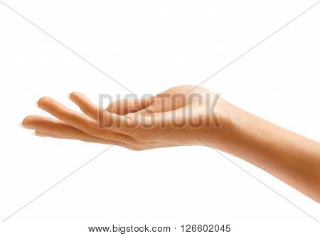 Woman's hand sign isolated on white background. Palm up close up.