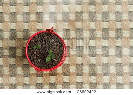 Young sprout grow in little red pail. Concept of agriculture,growth