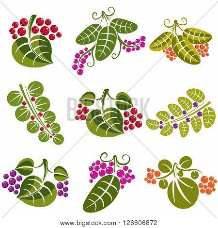Set of vector green spring leaves with tendrils and different berries and seeds. Ecology theme design elements gardening symbol. Natural icons set.