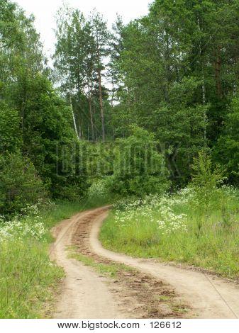 Road In Latgalia