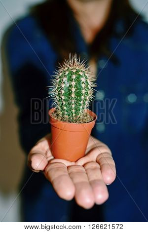 closeup of a young caucasian woman with a small cactus in a brown plant pot in the palm of her hand