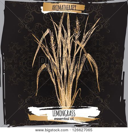 Cymbopogon aka lemongrass sketch on elegant black lace background. Aromatherapy series. Great for traditional medicine, perfume design, cooking or gardening.