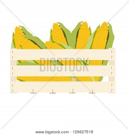Vector illustration corncobs with leaves in vegetable wooden box. Corn box. Fresh vegetables