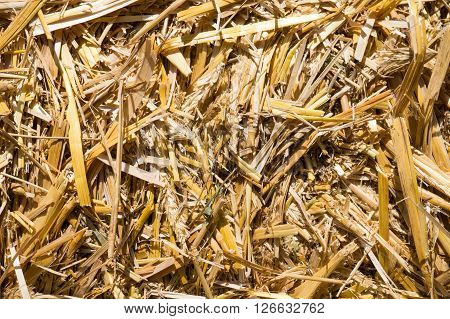 Bales of compressed straw rye close-up shot