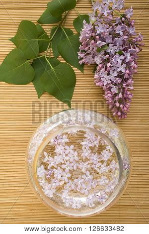 Scenery. A branch of lilacs near the bowl with water in which floated flowers
