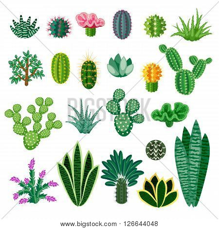 Cactus and succulents. Indoor plants isolated on white background. Big set of indoor plants in a cartoon style. Vector illustration.