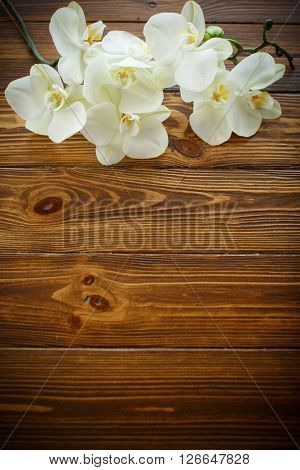 Beautiful white phalaenopsis flowers  on a wooden table