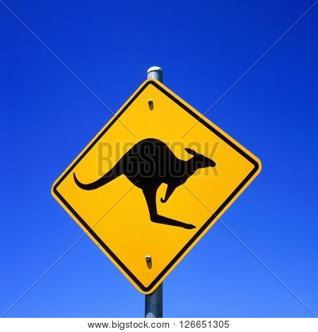 Roadside Kangaroo warning sign in the Australian outback.