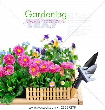 Marguerite Flowers And Other Spring Flowers And Garden Tools On A White Background With Space For Yo