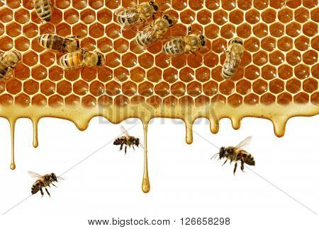 flow of sweet honey on the white background. Isolated.
