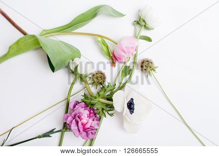 Pink tulip white anemone pink clove and white buttercup lying on white background from the top prepered to do bouquet