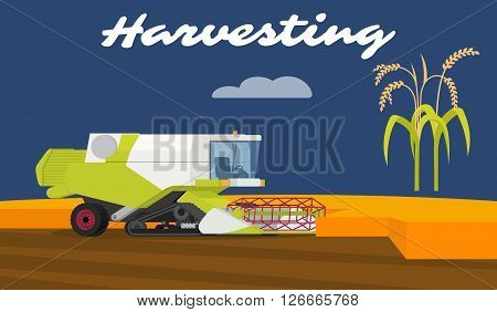 Modern combine harvester tractor working a rice field. Agriculture machinery. Agriculture crop harvest. Vector illustration.