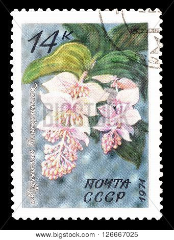 SOVIET UNION - CIRCA 1971 : Cancelled postage stamp printed by Soviet Union, that shows Tropical flowers.