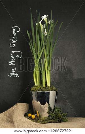 Daffodil Plant In Steel Pot With Christmas Greeting Inscription