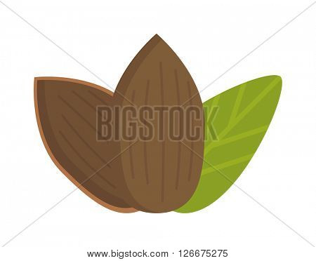 Tasty almonds nuts isolated healthy food natural tasty vegetarian kernel vector.