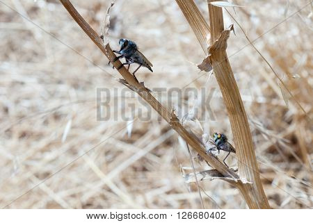 Dance Of The Robber Fly