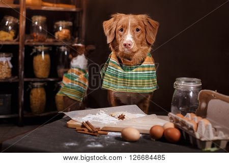 Dog Breed Jack Russell Terrier And Dog Nova Scotia Duck Tolling Retriever , Foods Are On The Table I